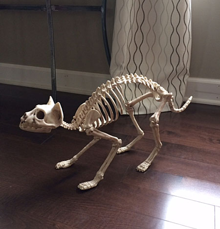 I got this Skeleton Cat at JoAnn fabrics.  It was on sale and I was able to use a coupon.